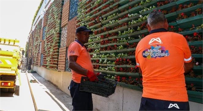 Tulumba Köprüsü'nün Dikey Bahçelerine 29 Bin 250 Çiçek Dikildi