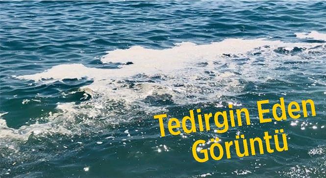Mersin'in Tece Sahilinde Görülen Görüntüler Vatandaşları Tedirgin Etti