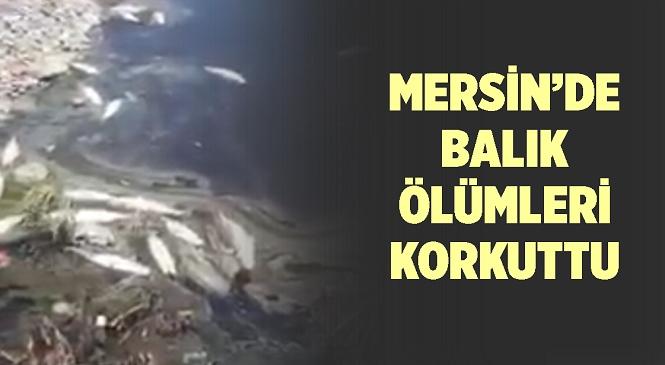 Mersin'in Bozyazı İlçesinde Korkutan Olay! Derede Bulunan Çok Sayıda Balık Öldü
