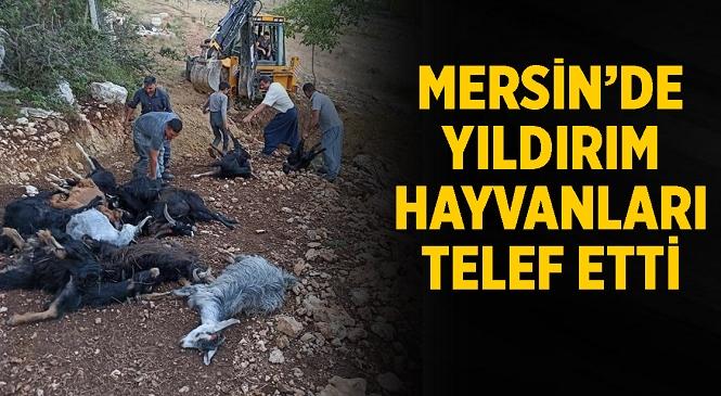 Mersin'de Acı Olay! Yağmur Sebebiyle Hayvanların Sığındığı Ağaca Yıldırım Düştü, 30 Küçükbaş Telef Oldu