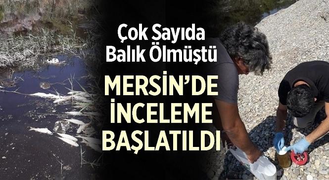 Mersin'in Bozyazı İlçesinde, Sarıgöl'de Meydana Gelen Balık Ölümleri Sonrası İnceleme Başlatıldı
