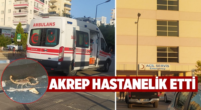 Mersin'de Korkutan Olay! Akrebin Soktuğu Yabancı Uyruklu Şahıs Hastaneye Kaldırıldı