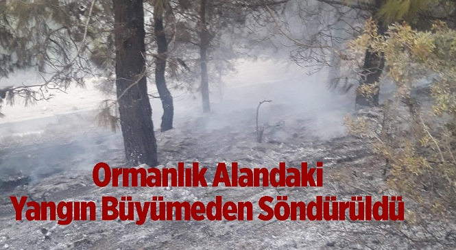 Mersin'in Tarsus İlçesinde Orman Yangını! İtfaiye Ekipleri Müdahale Etti