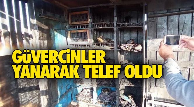 Mersin'de Ateşe Verilen Kuş Kafesindeki 27 Güvercin Yanarak Telef Oldu