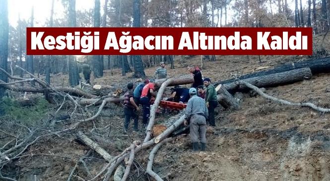 Mersin'in Aydıncık İlçesinde Korkutan Olay! Ormandaki Kesim Sırasında Ağacın Altında Kalan Adam Yaralandı