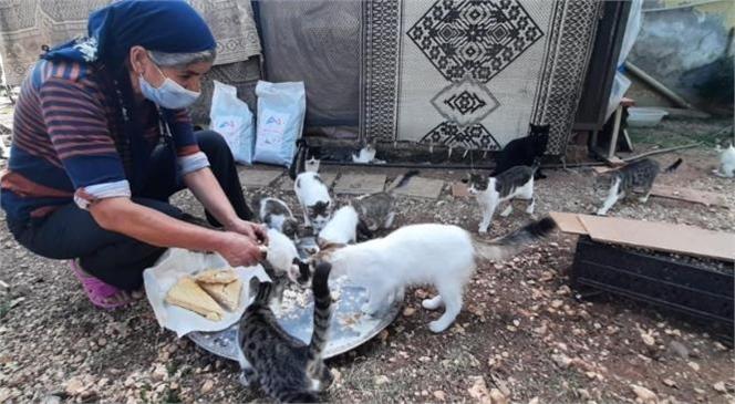 Çamlıyayla'da Sokak Hayvanlarına Sahip Çıkan Kadına Büyükşehir Belediyesi'nden Mama Desteği