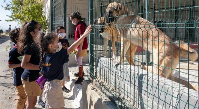 Öğrenciler, Kaşlı Geçici Hayvan Bakımevi'ndeki Patili Dostlarla Buluştu