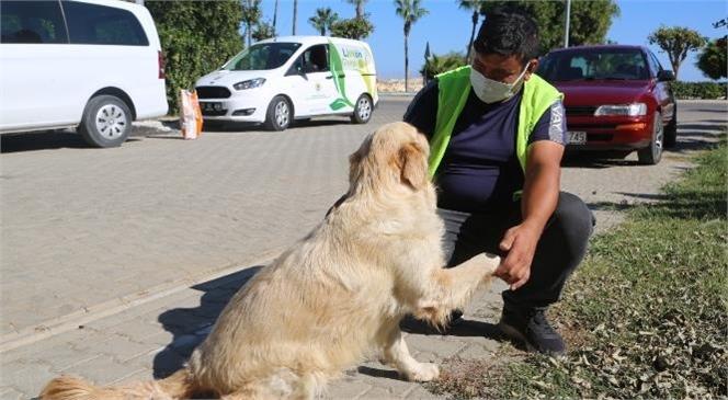 Sokakta Yaşayan Can Dostlarımızın Aç ve Susuz Kalmamaları İçin Yoğun Mesai Yapıyorlar