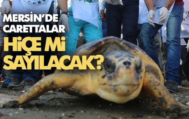 Mersin'de Caretta Carettalar Hiçe Mi Sayılacak? Yumurta Bıraktıkları Sahilde Festival Yapılacak