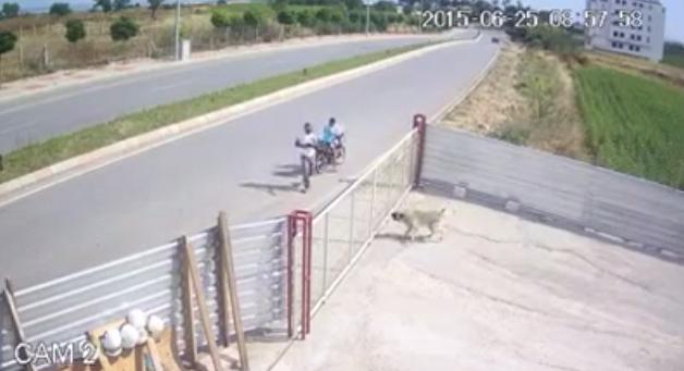 Havlayan Köpeğe Defalarca Silahla Ateş Ederek Öldüren Cani