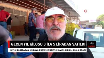 Video Haber: Mersin'de Kilosu 20 Liradan Satılan Kayısının Satışı 1 Liraya Düştü