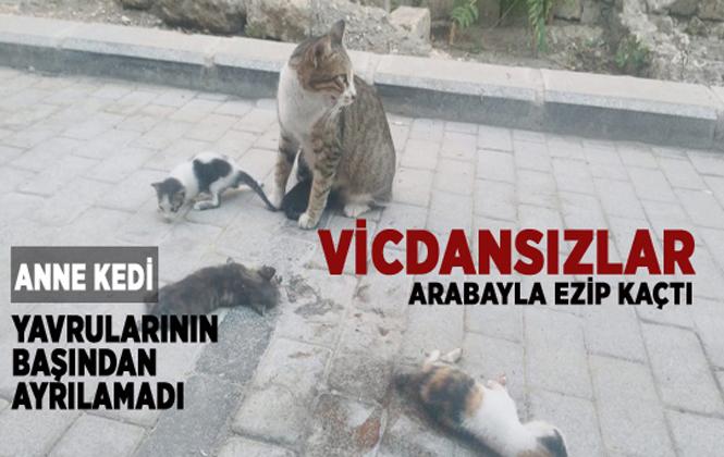 Anne kedi ölen yavrularının başından ayrılmadı