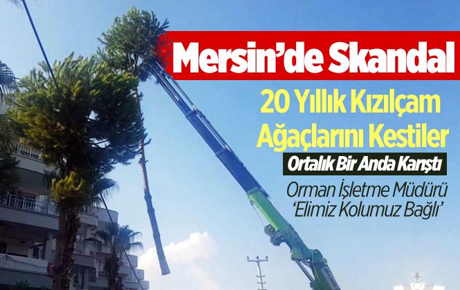 Mersin Anamur'da 20 yıllık Kızılçam Ağaçları Kesildi